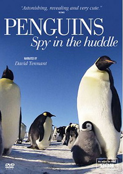 Penguins: Spy In The Huddle (DVD)